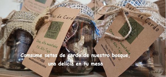 Setas_de_cardo_Orea_del_bosque_a_tu_casa